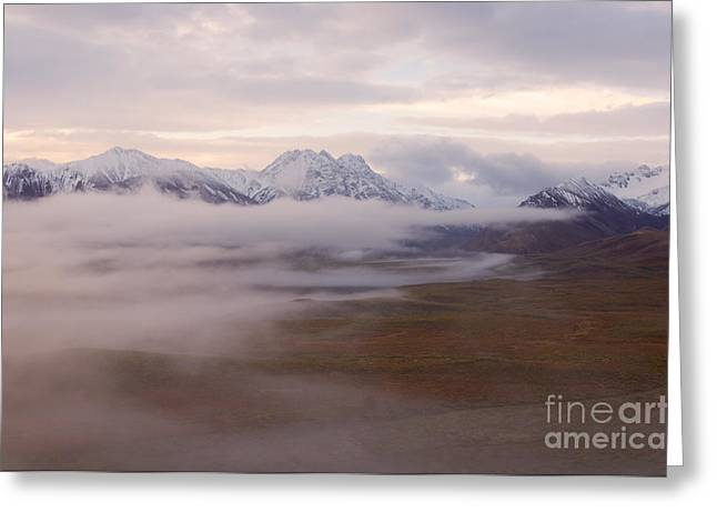 North Fork Greeting Cards - Fog In Denali National Park Greeting Card by Ron Sanford
