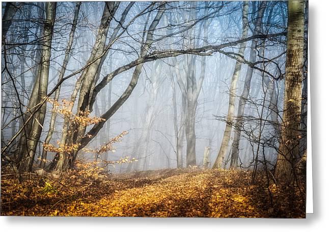 Deep Fears Greeting Cards - Fog in forest 2 Greeting Card by Dobromir Dobrinov