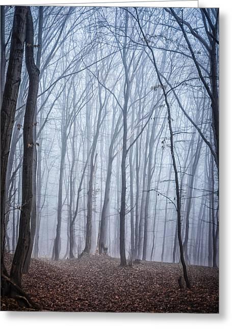 Deep Fears Greeting Cards - Fog in forest Greeting Card by Dobromir Dobrinov