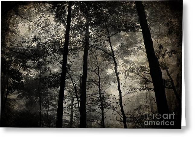 White Pyrography Greeting Cards - Fog in the Forest Greeting Card by Lorraine Heath