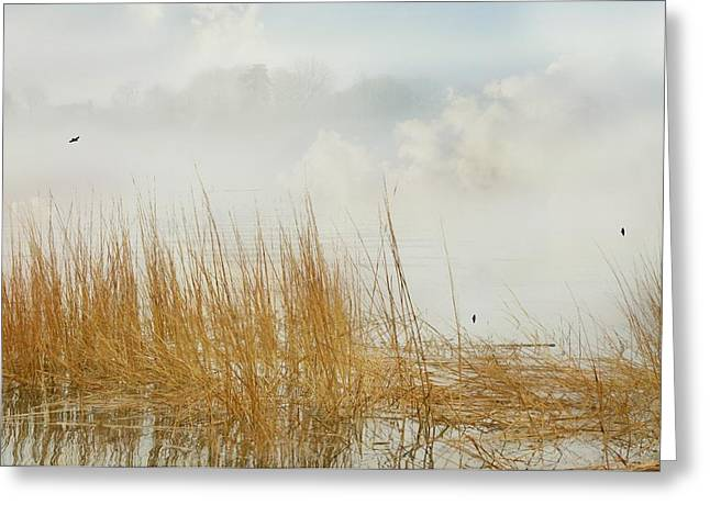 Foggy Beach Greeting Cards - Fog In the Grass Greeting Card by Diana Angstadt