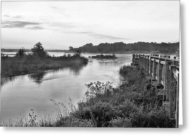 Fog On The Bayou Black And White Greeting Card by JC Findley