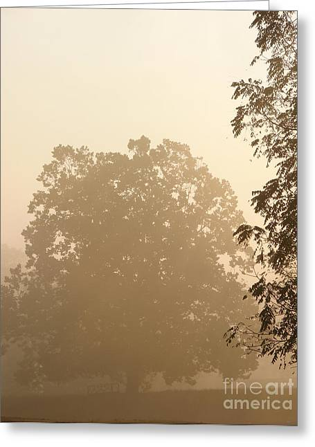Diffusion Greeting Cards - Fog over Countryside Greeting Card by Olivier Le Queinec
