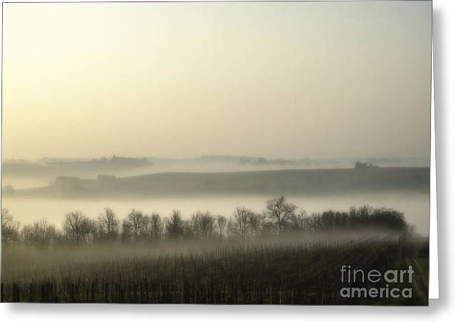 Chianti Hills Greeting Cards - Fog over vineyards Greeting Card by Patricia Hofmeester