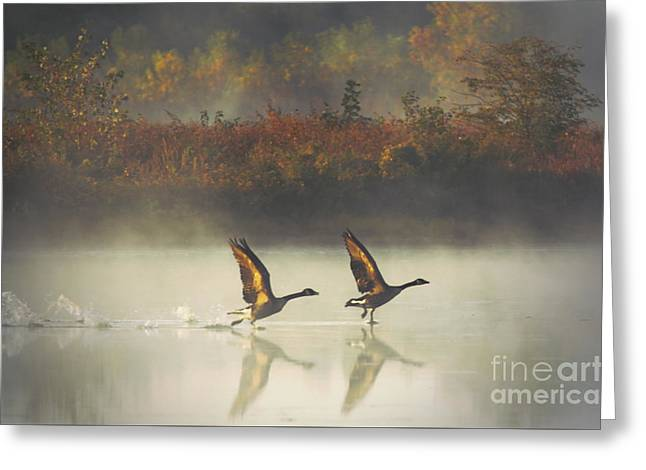 Chalco Hills Recreation Area Greeting Cards - Foggy Autumn Morning Greeting Card by Elizabeth Winter