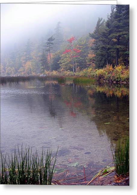 Maine Landscape Greeting Cards - Foggy Autumn Morning Greeting Card by Mountain Dreams