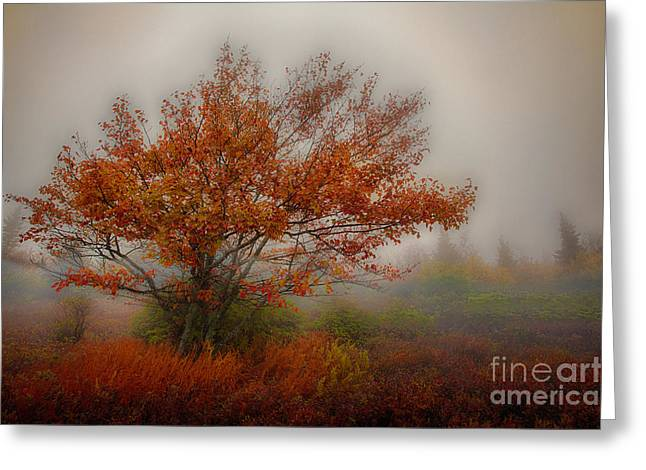 Paint Photograph Greeting Cards - Foggy Fall at Dolly Sods West Virginia Greeting Card by Dan Carmichael