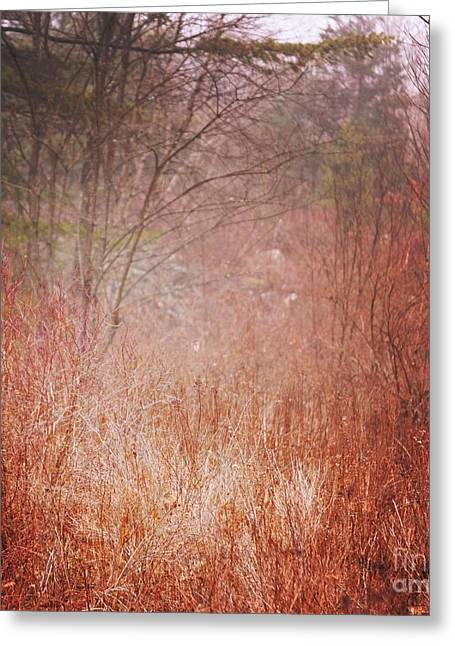 Fall Grass Greeting Cards - Foggy Field Greeting Card by HD Connelly