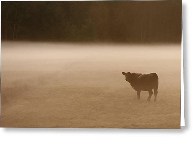 Three Cows Greeting Cards - Foggy Field Greeting Card by Jim Tobin