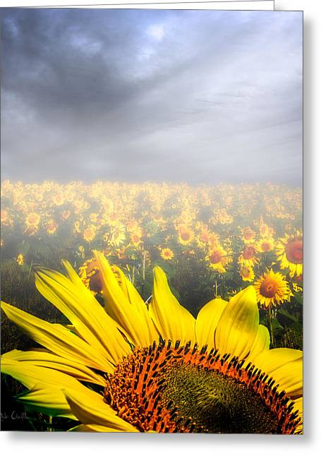 Maine Spring Greeting Cards - Foggy Field of Sunflowers Greeting Card by Bob Orsillo