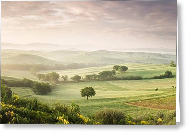Belvedere Greeting Cards - Foggy Field, Villa Belvedere, San Greeting Card by Panoramic Images