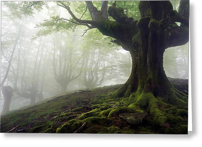 Pais Vasco Greeting Cards - Foggy Forest With Mysterious Trees With Twisted Roots Greeting Card by Mikel Martinez de Osaba
