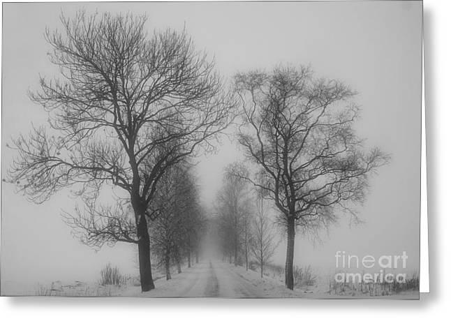 White Decor Greeting Cards - Foggy lane Greeting Card by Veikko Suikkanen