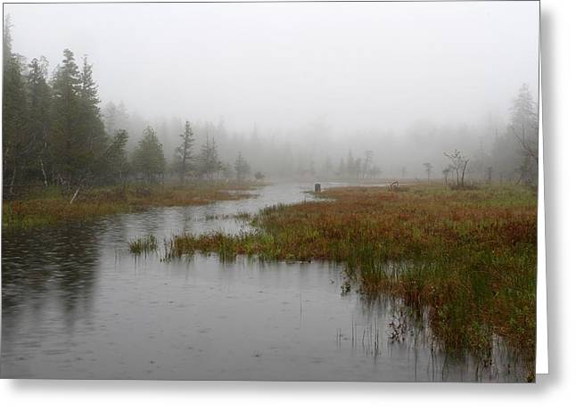 Raining Down Greeting Cards - Foggy Marsh near Jordan Pond Greeting Card by Juergen Roth