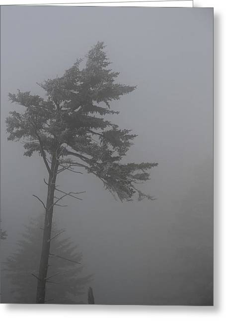 Misty Pine Photography Greeting Cards - Foggy Morning At Clingmans Dome Greeting Card by Dan Sproul