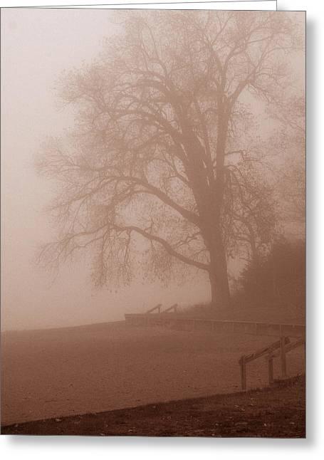 Barbara Smith Greeting Cards - Foggy Morning Greeting Card by Barbara Smith