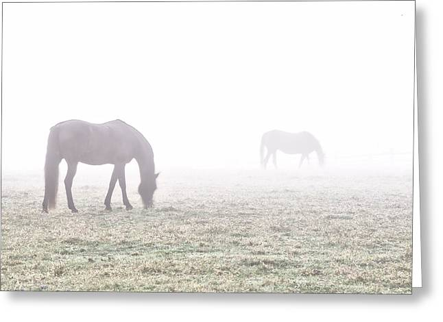 Erdenheim Farm Greeting Cards - Foggy Morning  in Flourtown Greeting Card by Bill Cannon