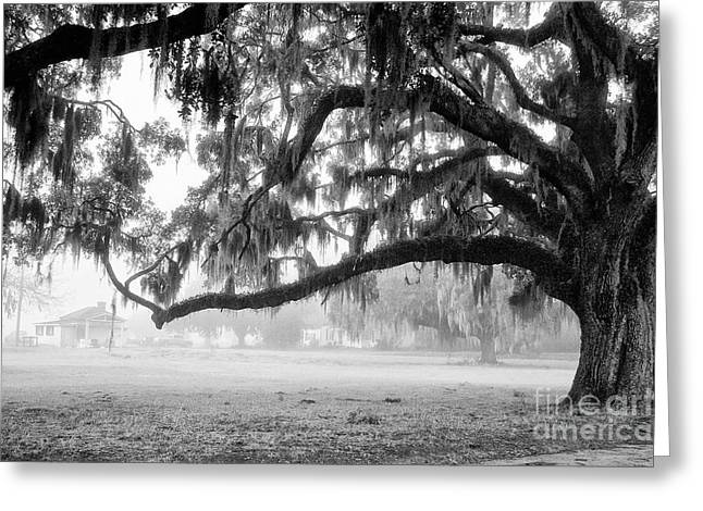 Scott Hansen Greeting Cards - Foggy Morning on Coosaw Plantation Greeting Card by Scott Hansen