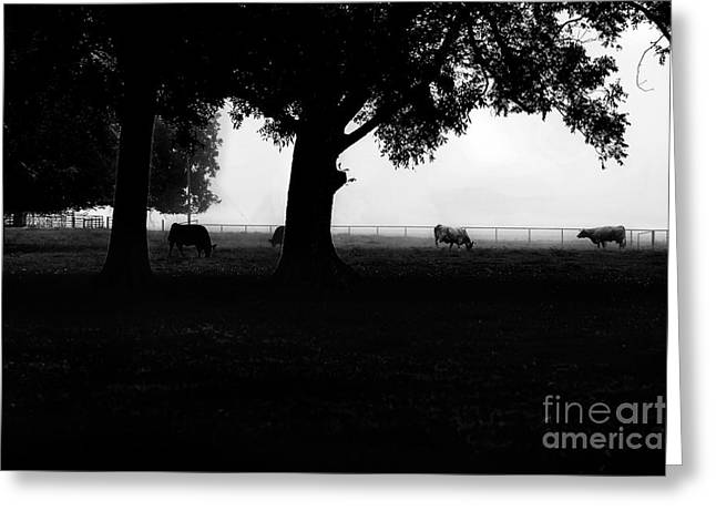 Foggy Morning Silhouette Pasture  Greeting Card by Jessie Paul