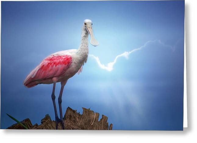 Foggy Morning Spoonbill Greeting Card by Mark Andrew Thomas