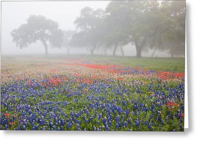 Foggy Day Greeting Cards - Foggy Morning Wildflowers Greeting Card by Eggers   Photography