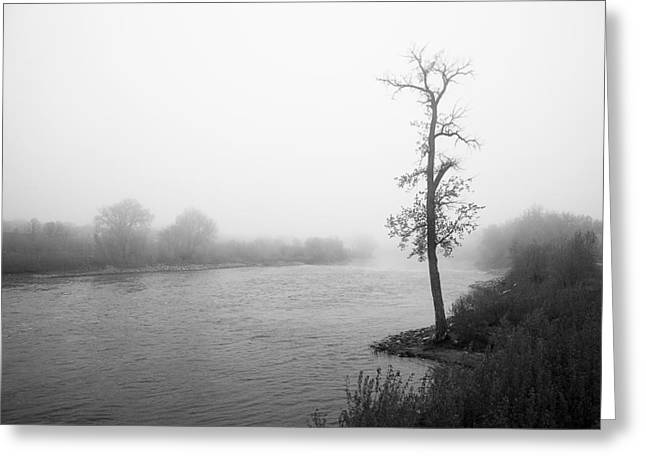 Erickson Greeting Cards - Foggy Morning Tree by River Greeting Card by Donald  Erickson