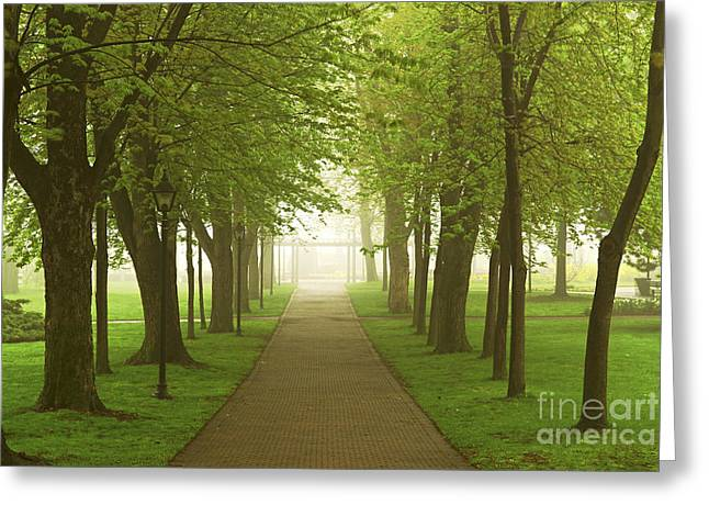 Ahead Greeting Cards - Foggy spring park Greeting Card by Elena Elisseeva