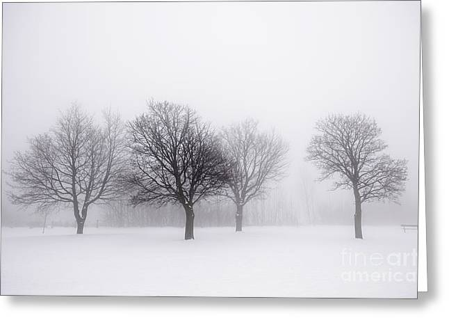 Snow Scene Landscape Greeting Cards - Foggy park with winter trees Greeting Card by Elena Elisseeva