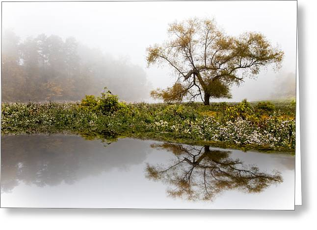 Meadow Willows Greeting Cards - Foggy Reflections Landscape Greeting Card by Debra and Dave Vanderlaan