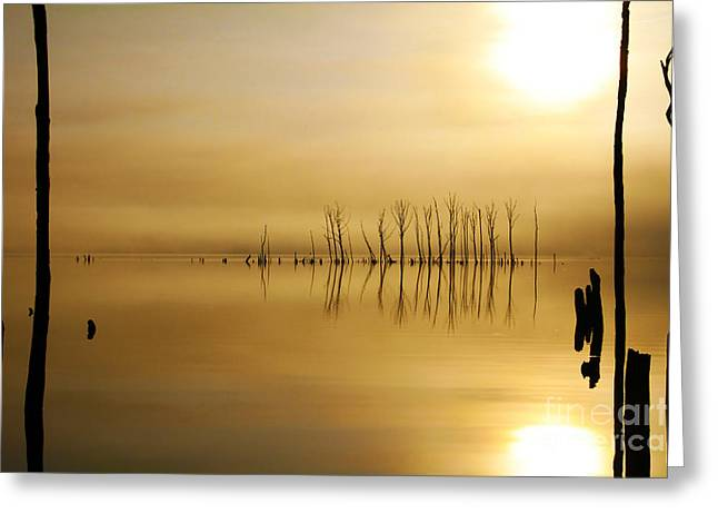 Manasquan Reservoir Greeting Cards - Foggy Rise Greeting Card by Roger Becker