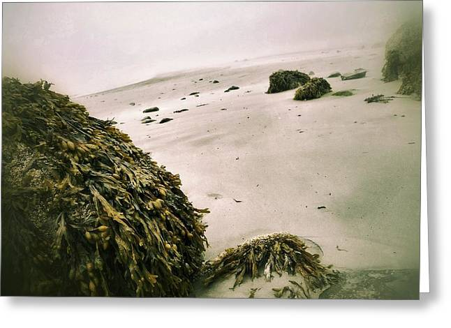 Maine Beach Digital Art Greeting Cards - Foggy shore Greeting Card by Olivier Calas