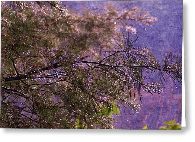 Pine Needles Drawings Greeting Cards - Foggy Spring Rain Morning Greeting Card by Rosemarie E Seppala