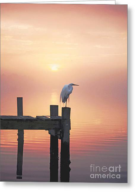 Foggy Beach Greeting Cards - Foggy Sunset on Egret Greeting Card by Benanne Stiens