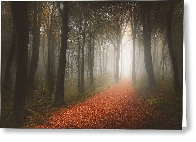 Hiking Greeting Cards - Foggy trail in the forest Greeting Card by Toma Bonciu
