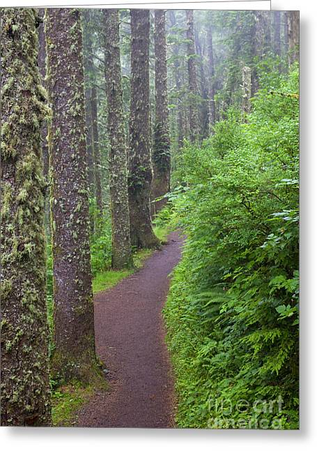 Moss Greeting Cards - Foggy Trail Greeting Card by Mike  Dawson
