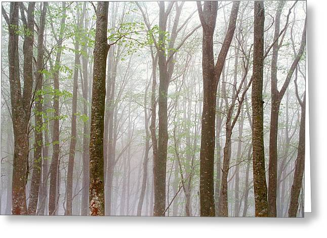 Woodland Scenes Greeting Cards - Foggy Trees In Forest Greeting Card by Panoramic Images