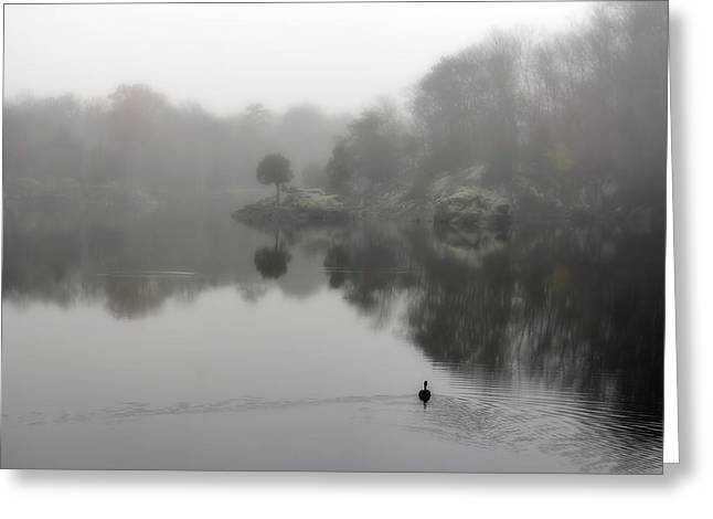 Popular Goose Images Greeting Cards - Foggy Widewater Reflection In Maryland Greeting Card by Francis Sullivan