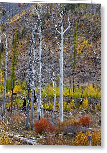 Daysray Photography Greeting Cards - Foilage of Fall Greeting Card by Fran Riley