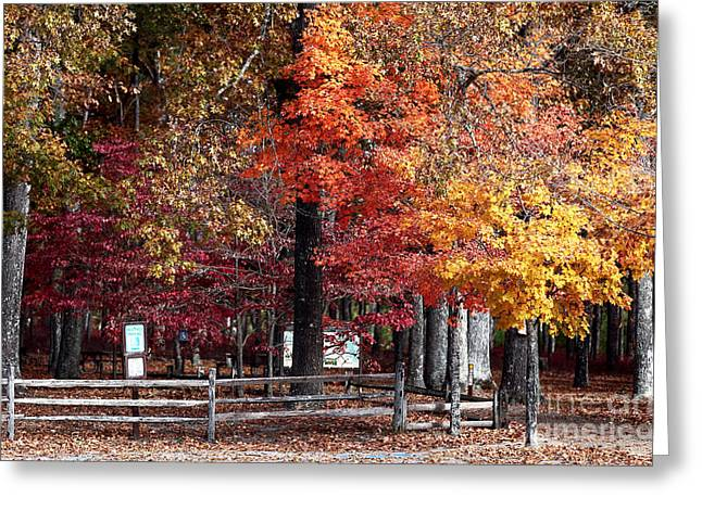 Foliage Colors Greeting Card by John Rizzuto