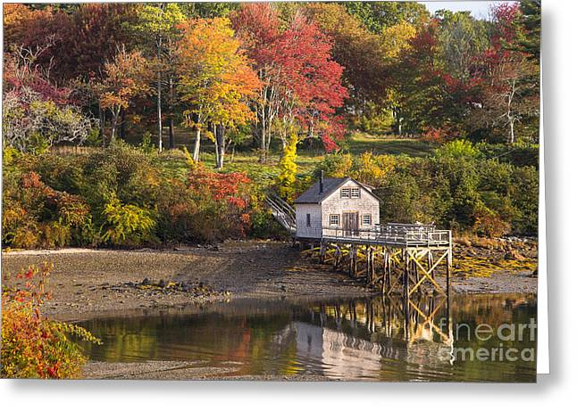 Foliage On The Coast Greeting Card by Benjamin Williamson