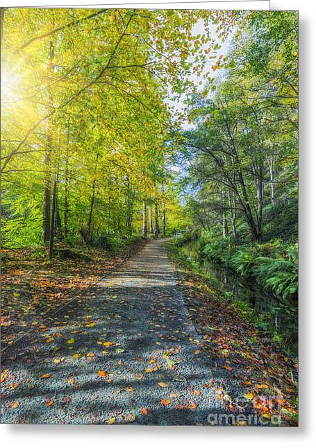 Autumn Prints Greeting Cards - Follow Me Greeting Card by Ian Mitchell
