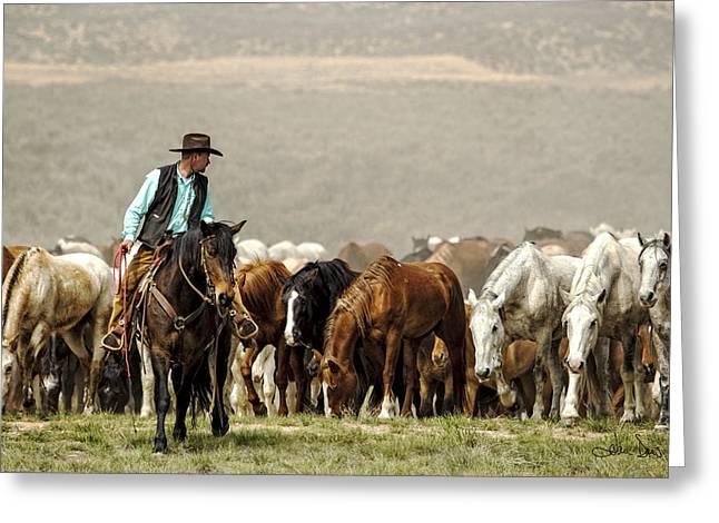 Beautiful Equine Photos Fine Art Greeting Cards - Follow Me Greeting Card by Joan Davis