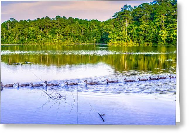 Sesquicentennial Greeting Cards - Ducks In A Row Greeting Card by Rob Sellers