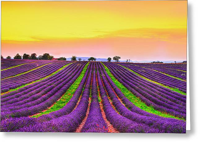 Provence Greeting Cards - Follow my Dreams Greeting Card by Midori Chan