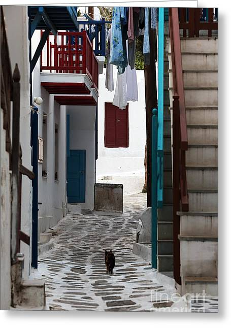 Hanging Laundry Greeting Cards - Follow the Cat in Mykonos Greeting Card by John Rizzuto