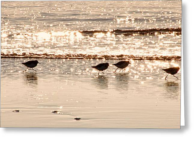 Seabirds Greeting Cards - Follow the Leader Greeting Card by Allan Van Gasbeck