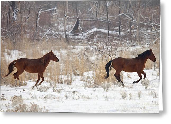 Wild Horse Greeting Cards - Follow the Leader Greeting Card by Mike  Dawson