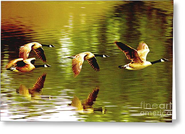 Canada Goose Greeting Cards - Follow the Leader Greeting Card by Scott Pellegrin
