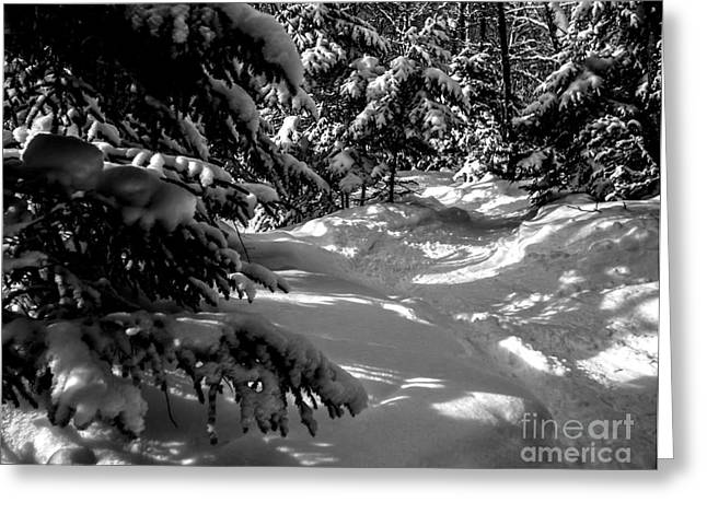 Ski Art Greeting Cards - Follow the White Snowy Path Greeting Card by James Aiken