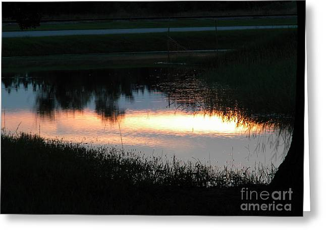 Animals Love Greeting Cards - Following Rain Sunset Greeting Card by Matthew Seufer